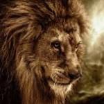 LION slave-C