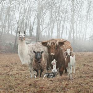 FARM ANIMALS mixed